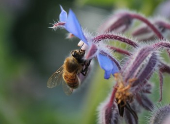 How We Can Bee the Change: Pollination Panel Discussion at Seattle U