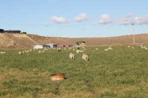 Whitman Team Supports Grass-Based Ranchers