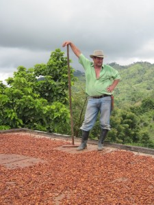 Drying the cacao beans