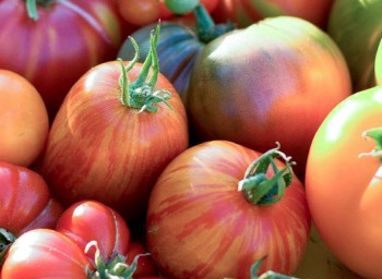 headerl_tomatoes2_1420x520