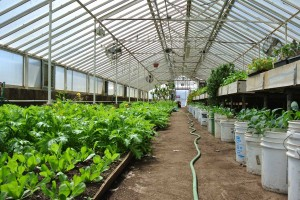The beds are raised to hip-level to help farmworkers and volunteers with better ergonomics