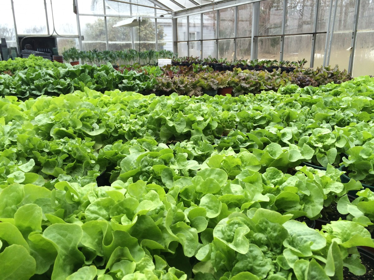 The Fork to Farm grant will double the growing space for greens this year at Horse Listeners Orchard.