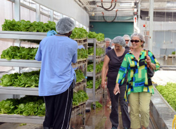 cleveland area_green city growers_greens_1420x520