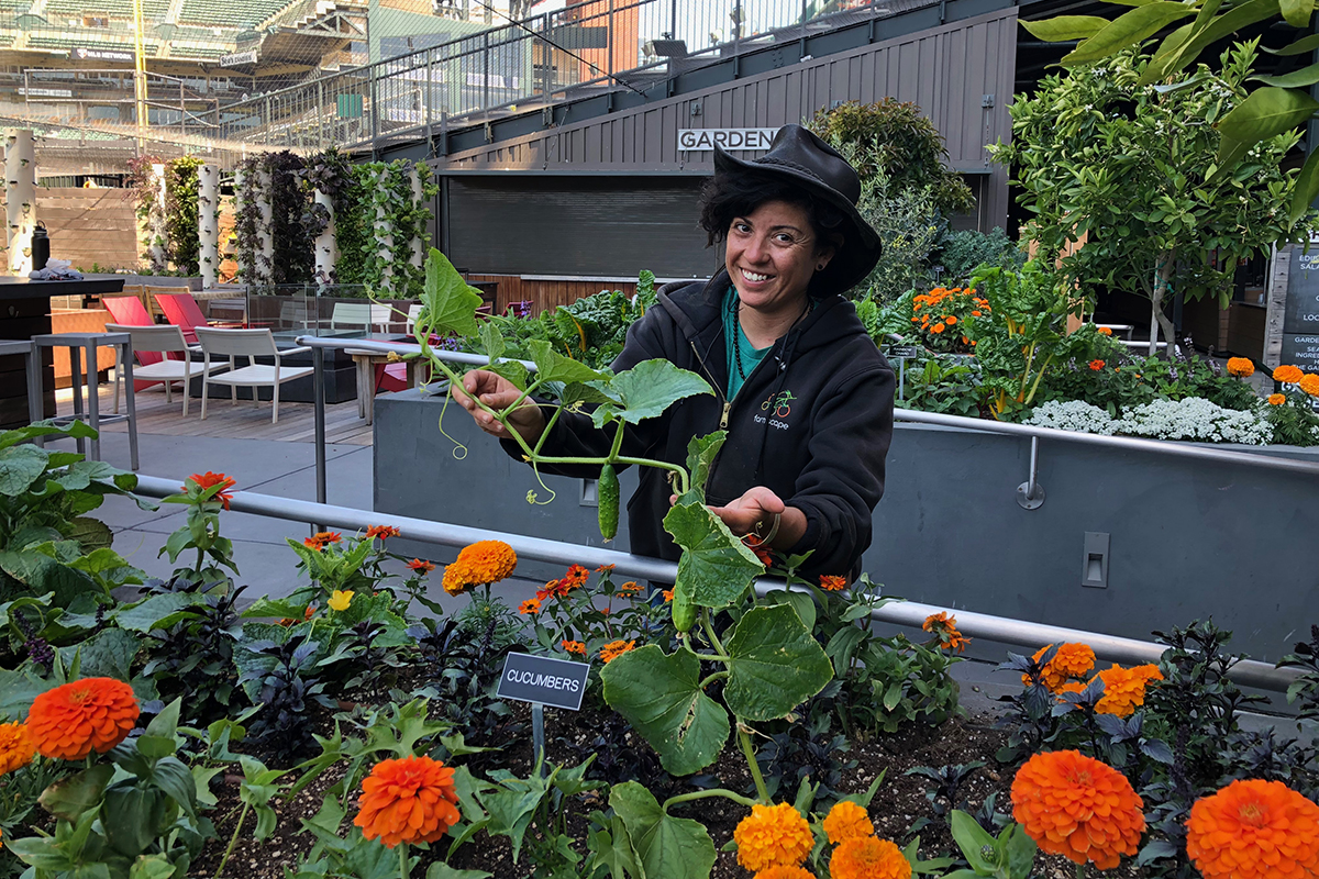 Farmscape farmer Cristal Alejandrez holding Row 7's 7082 cucumbers growing at the Garden at Oracle Park
