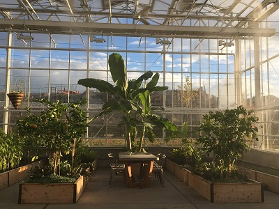 Tables inside the greenhouse are available for meetings at Overstock.com