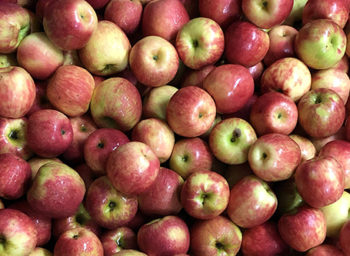 Students Learn All About Apples at Glei's Orchards and Greenhouses