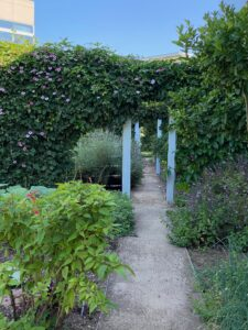 A walk down the garden path in Capital Group's Irvine, CA garden reveals abundant herbs like basil, chives, and lavender as well as seasonal produce and trailing flowering vines.