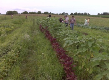 Student Farms: The Next Sustainable Frontier