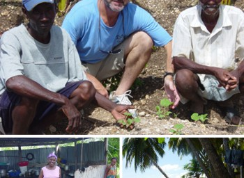 Planting a sustainable future for Haiti: update #4 from David Lachance