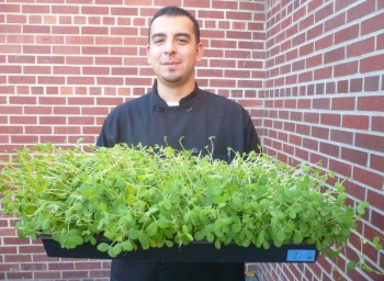 From Rooftop to Salad Bowl: Microgreens Galore