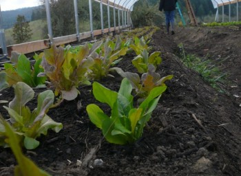 Zena Farm: Willamette University's 3,000-Square-Foot Kitchen Garden
