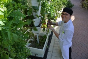 Hydroponic Café Garden Takes Root at Eckerd College