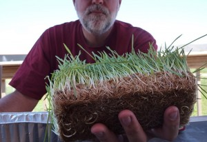 Scot Laney holds out some forage grown hydroponically that will serve as a more sustainable feed for his cattle.