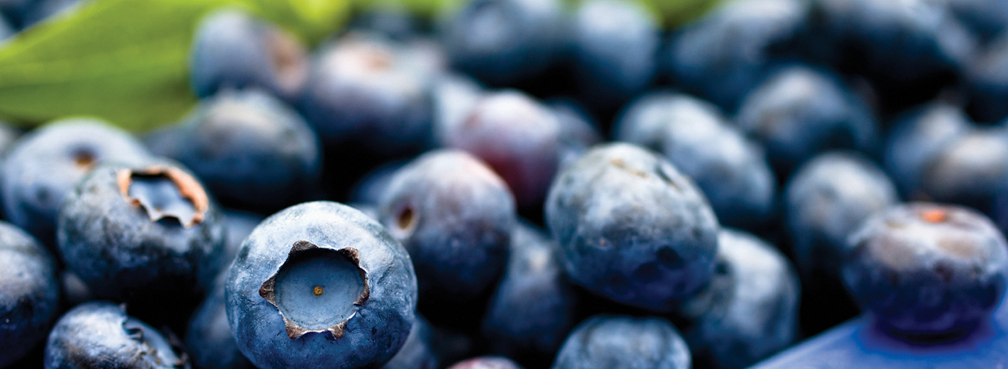 blueberries2_1420x520