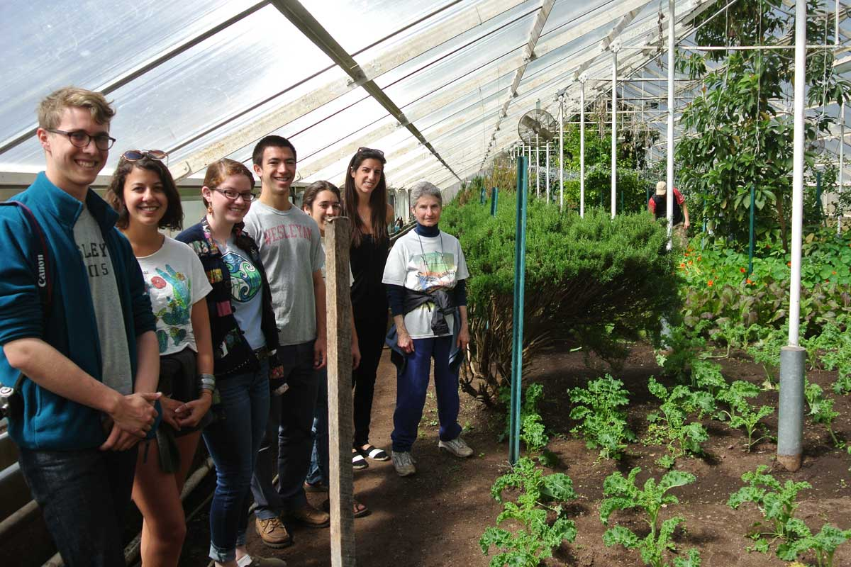 In Urban Oaks Organic's heated greenhouse -- note  avocado tree in the background!