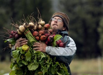 Owner Jason Plotkin carries white, golden and red beets at his Golden Acre Farm, a small organic veggie farm next to North Table Mountain in Golden,
