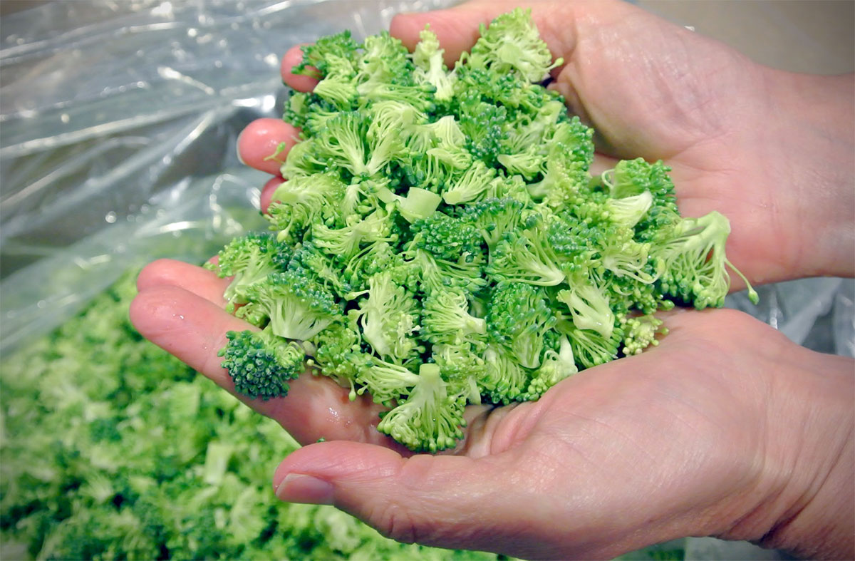 When heads of broccoli are broken into retail-sized bags, these small florets often fall off and are thrown away.