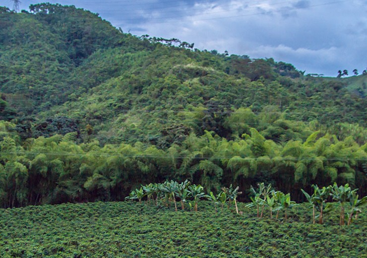 fairtrade_tea__MG_7068_1420pxheader