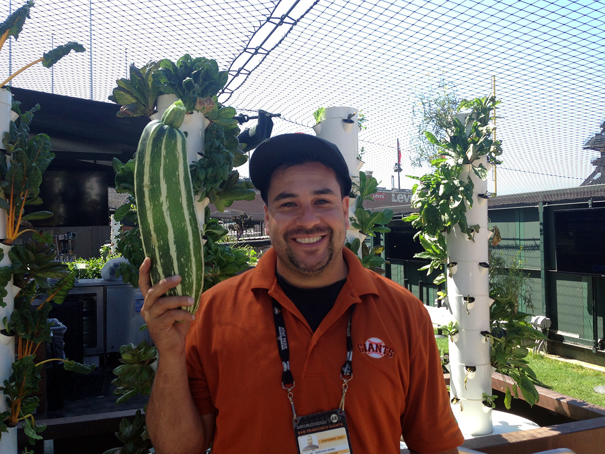 A Giants employee with one of the Garden's overgrown zucchinis