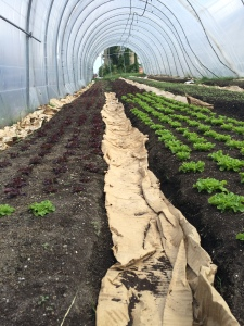 Strength to Love Hoop House