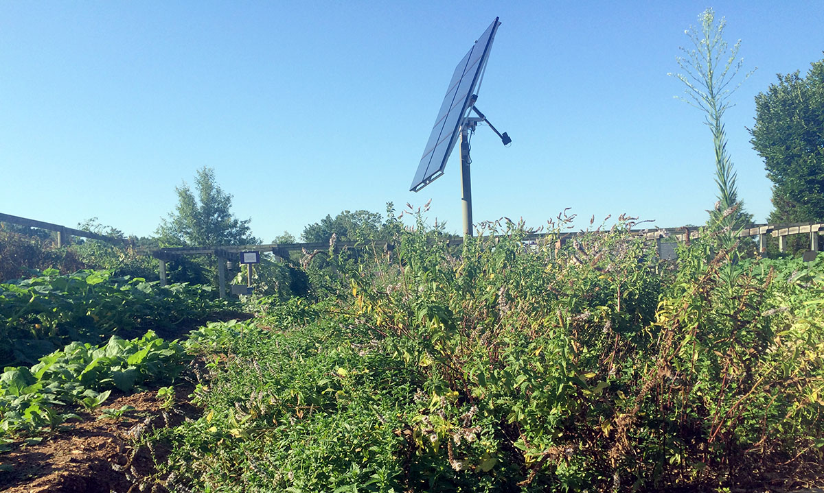A Haven for Sustainable Agriculture at Furman University