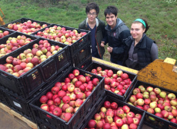 Willamette Students Go Gleaning to Help the Needy