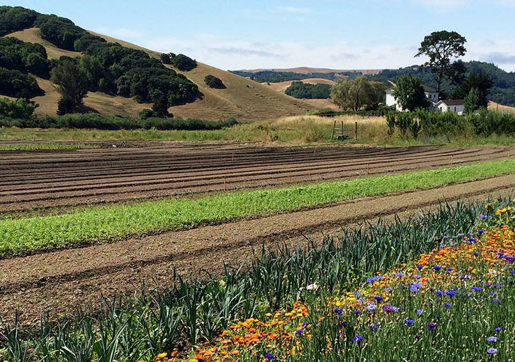 norcal chef exchange_county line harvest fields 2_1420x520