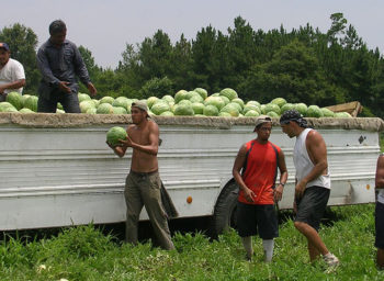 A Farmworker Awareness Week Spotlight