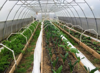 Case Western's Farm Grows Minds and Food