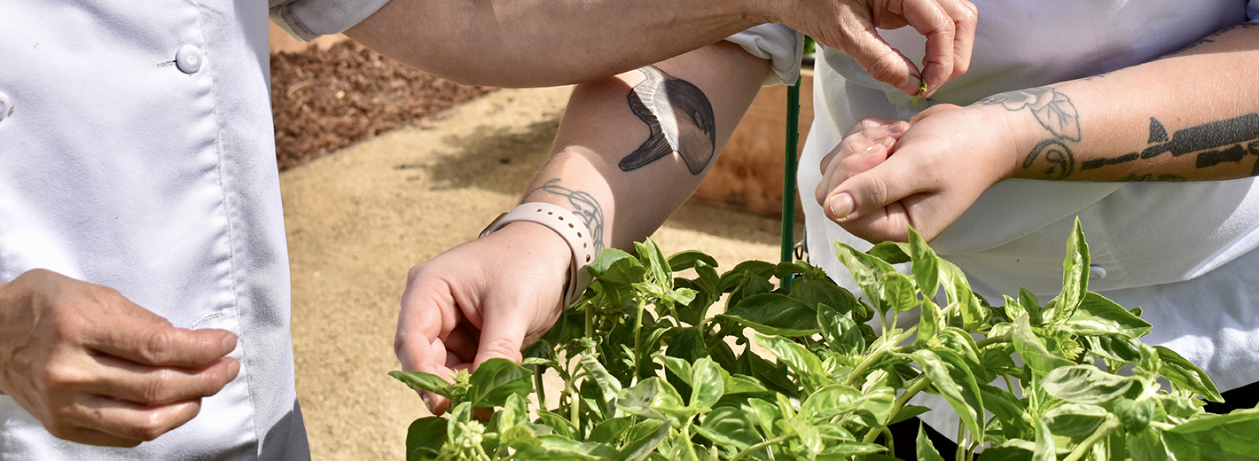 Terri and Chef/Manager Chelsea Holmes picking herbs