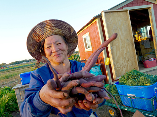 The Hmong farmers each get a shed to store their tools