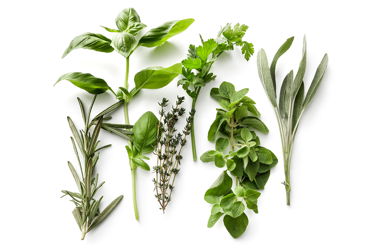 Fresh Herbs: Rosemary, Basil, Thyme, Parsley, Oregano and Sage