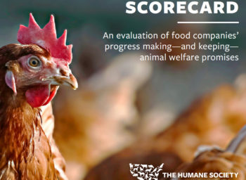Humane Society Ranks Bon Appétit #1 of Food Management Companies
